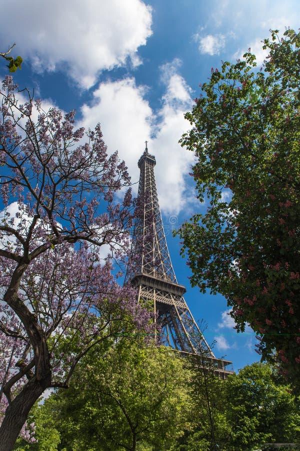 Gli alberi sboccianti della magnolia con eifel si elevano su fondo immagine stock libera da diritti