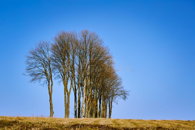 Gli alberi senza foglie sulla collina in autunno condiscono fotografia stock