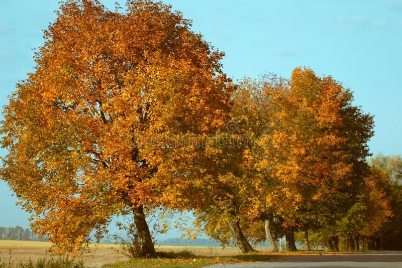 Gli alberi si avvicinano alla strada immagini stock