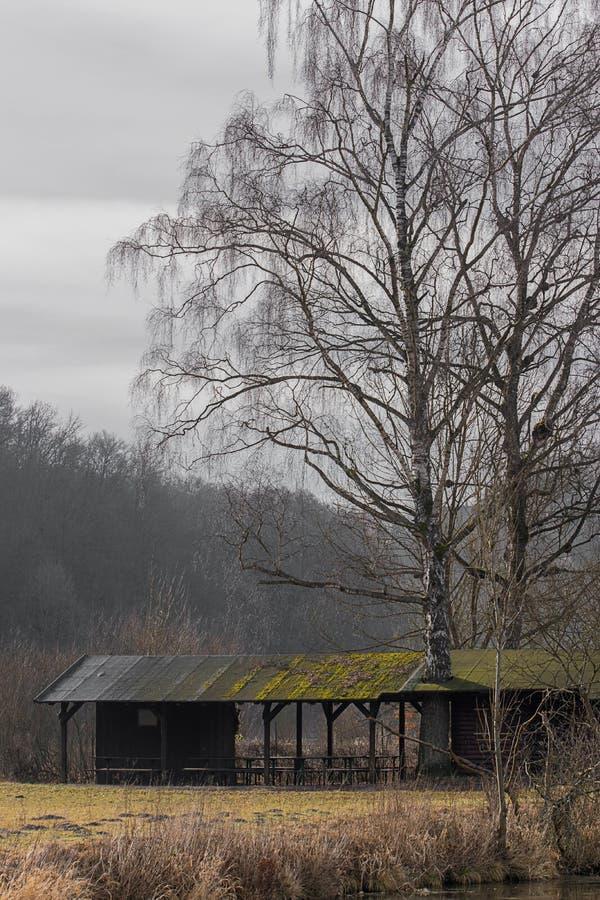 Gli alberi si sviluppano tramite il tetto fotografia stock
