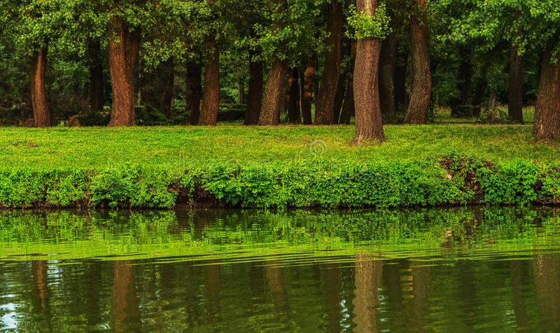 Gli alberi si sviluppano in un parco vicino allo stagno fotografia stock