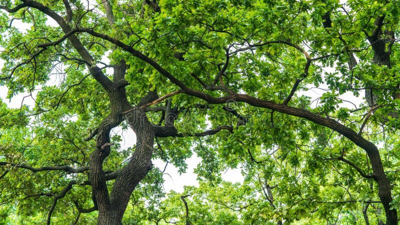 Gli alberi si sviluppano in un parco vicino allo stagno immagini stock libere da diritti