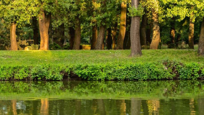Gli alberi si sviluppano in un parco vicino allo stagno fotografie stock libere da diritti