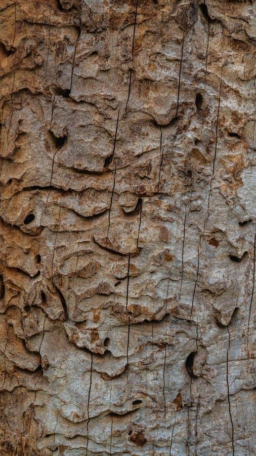 Gli alberi si sviluppano in un parco vicino allo stagno immagine stock