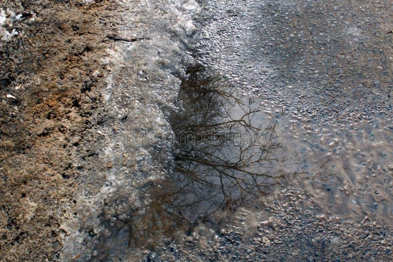 gli alberi sono in primavera pozza riflessa fotografia stock libera da diritti