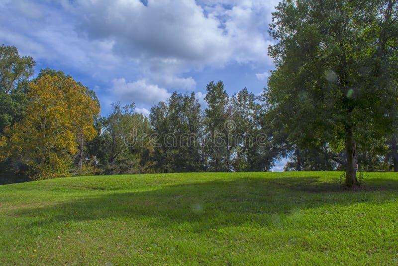 Gli alberi su una collina immagini stock