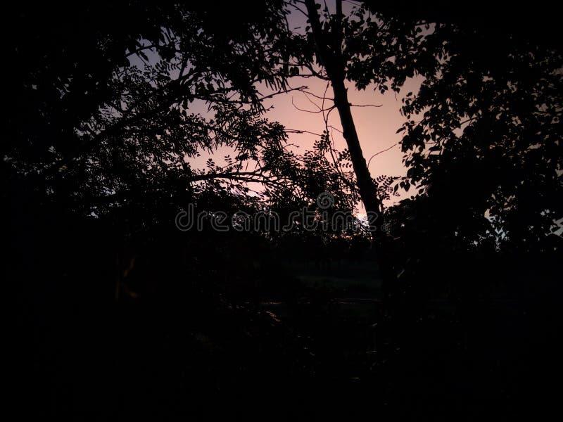 Gli alberi sui precedenti di bello tramonto fotografia stock