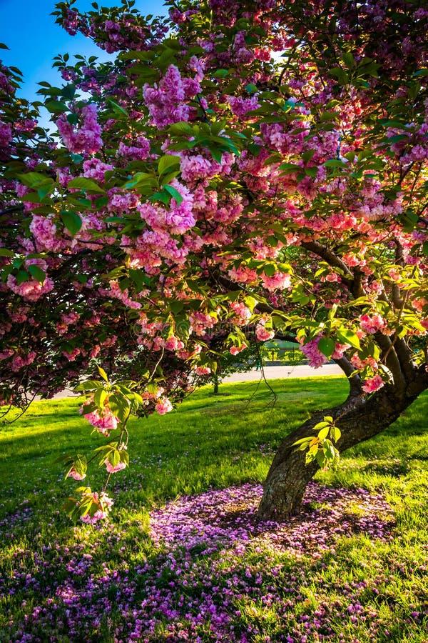 Gli alberi variopinti in collina del druido parcheggiano, Baltimora, Maryland fotografia stock libera da diritti