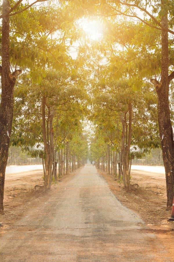 Gli alberi verdi della natura con la strada rurale bike in parco calmo in primavera al tramonto soleggiato immagine stock libera da diritti