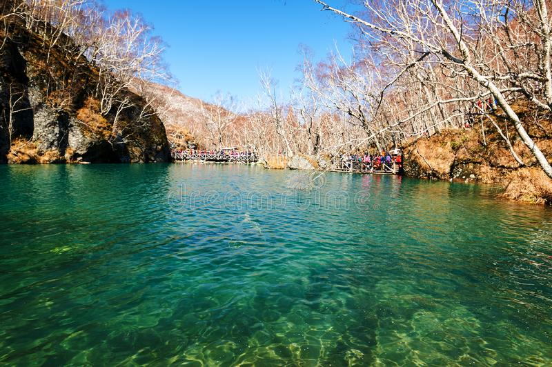 Gli alberi verdi di autunno e del lago delle montagne di Changbai immagine stock