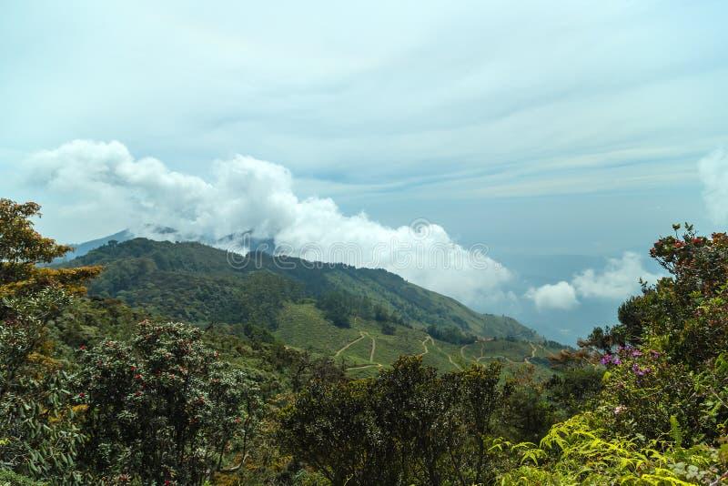 Gli altopiani dello Sri Lanka abbelliscono le montagne di verde di foresta nella nebbia fotografie stock libere da diritti
