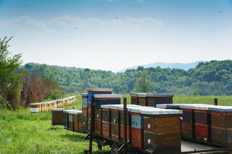 Gli alveari hanno montato sul rimorchio che sta in un campo di erba fotografie stock libere da diritti