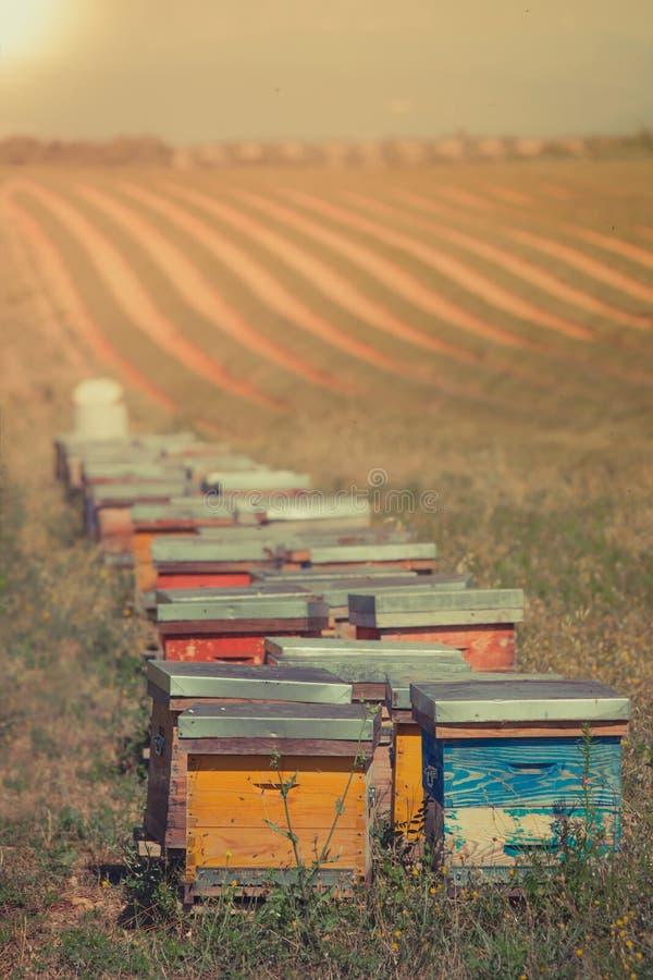 Gli alveari sul girasole sistemano in Provenza, Francia immagini stock libere da diritti