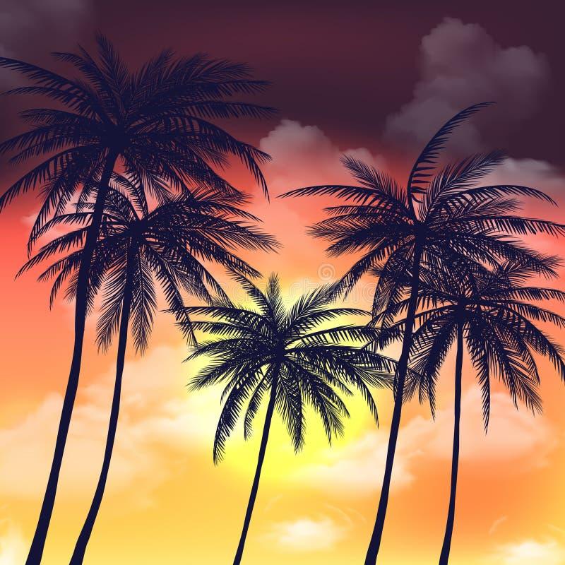 Gli ambiti di provenienza tropicali dell'estate hanno messo con le palme, il cielo ed il tramonto illustrazione di stock