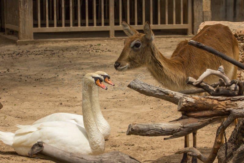 Gli animali dello zoo nello zoo di limassol parcheggiano for Gli animali dello stagno