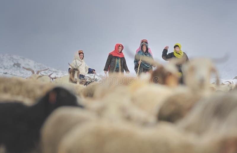 Gli anziani della salita del villaggio nelle aree pericolose per portare a casa i yak persi immagine stock