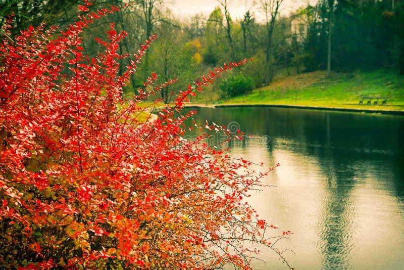 Arbusti ed alberi del lago di paesaggio dell'annata nel parco in autunno fotografia stock libera da diritti