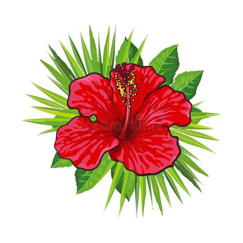 Gli ibischi luminosi rossi fioriscono con le foglie di palma verdi nello stile di schizzo - composizione floreale tropicale illustrazione di stock