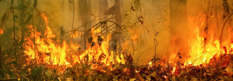Gli incendi in Australia, il fuoco è alimentato dal vento e dal calore fotografie stock