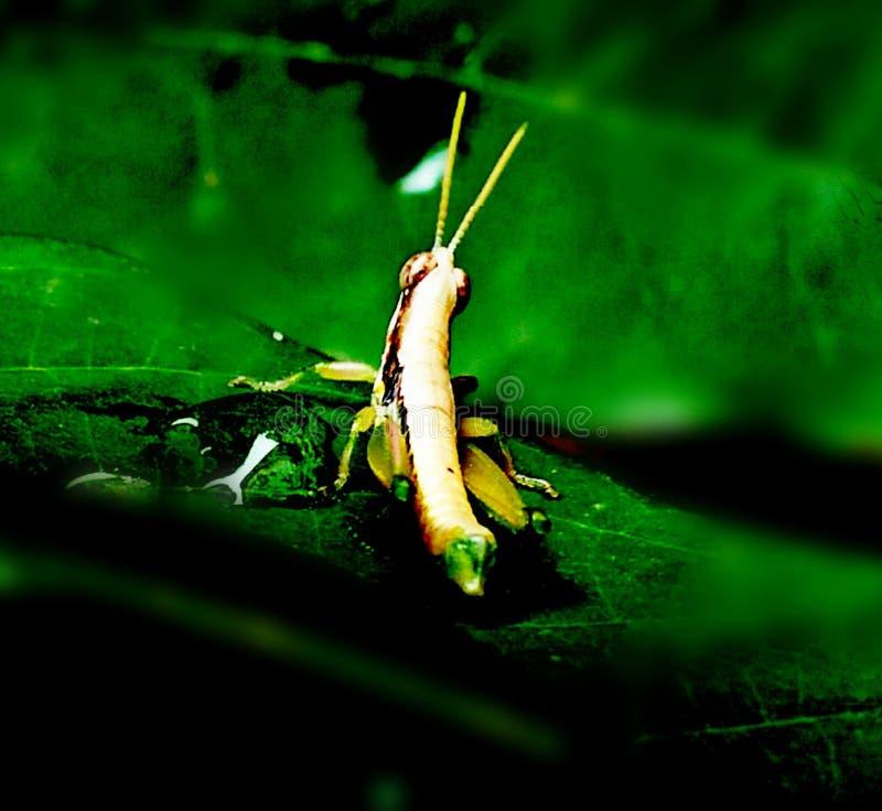 Gli insetti prendparteono al mondo fotografia stock