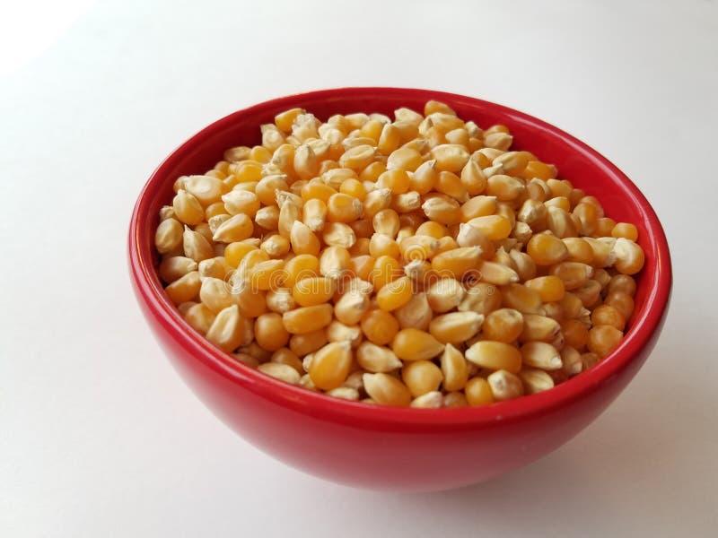 Gli interi grani studiano - la ciotola di noccioli di cereale unpopped in ciotola rossa immagine stock libera da diritti