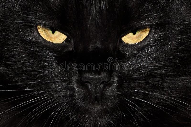 Gli occhi di gatto lanuginosi neri si chiudono su fotografia stock libera da diritti