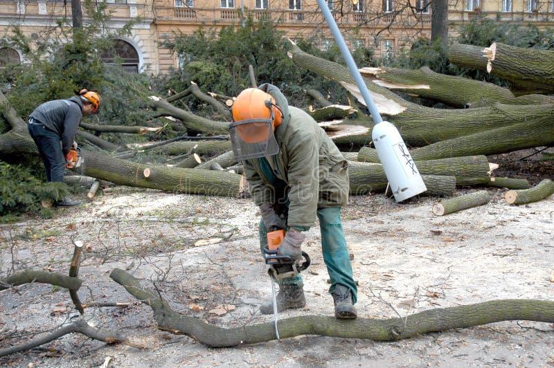 Gli operai puliscono l'albero caduto fotografia stock libera da diritti