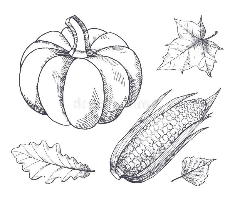 Gli schizzi dei semi del cereale e della zucca descrivono il vettore stabilito illustrazione di stock