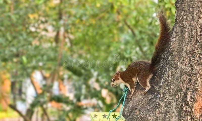 Gli scoiattoli stanno scendendo mangiare i fagioli fotografia stock