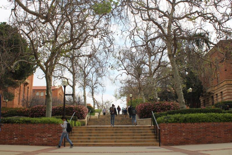 Gli studenti di Los Angeles UCLA dell'università di California camminano sulla città universitaria immagine stock