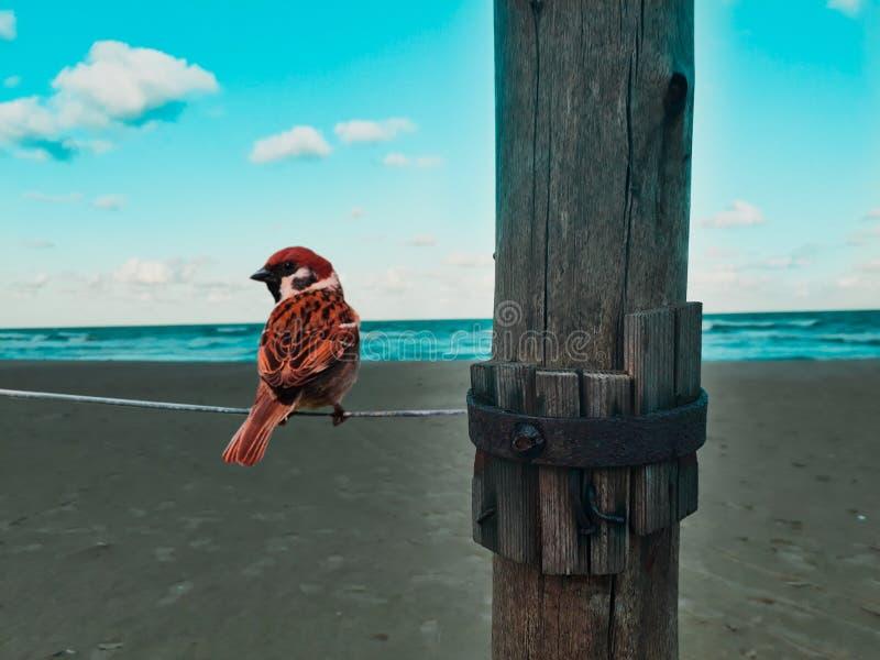 Gli uccelli amano l'estate Marocco blu fotografia stock