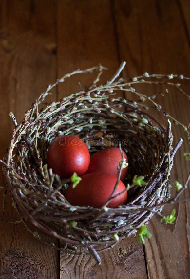 Gli uccelli annidano con le uova e le prime foglie fotografia stock libera da diritti