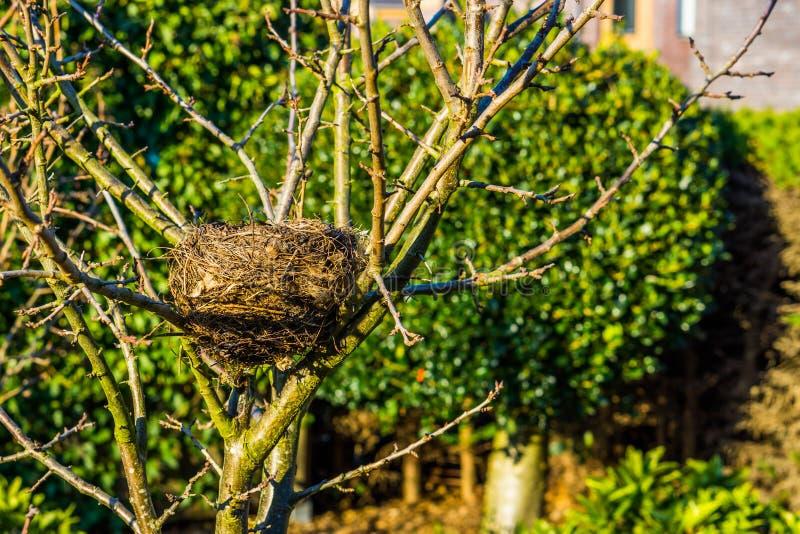 Gli uccelli annidano in un albero nel giardino, stagione primaverile, casa dell'uccello, case elaborate animali immagine stock