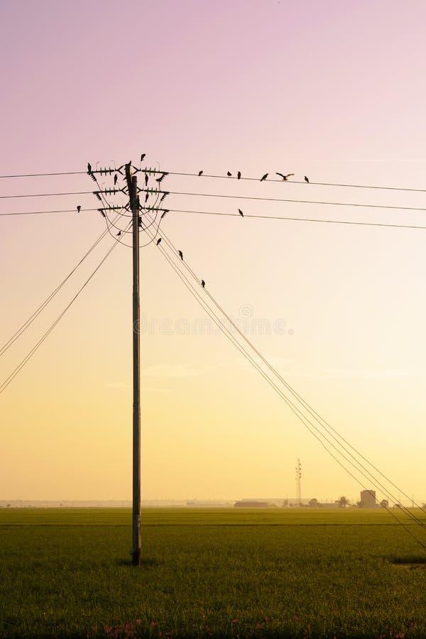 Gli uccelli appendono sulle linee elettriche dell'elettricità fotografia stock