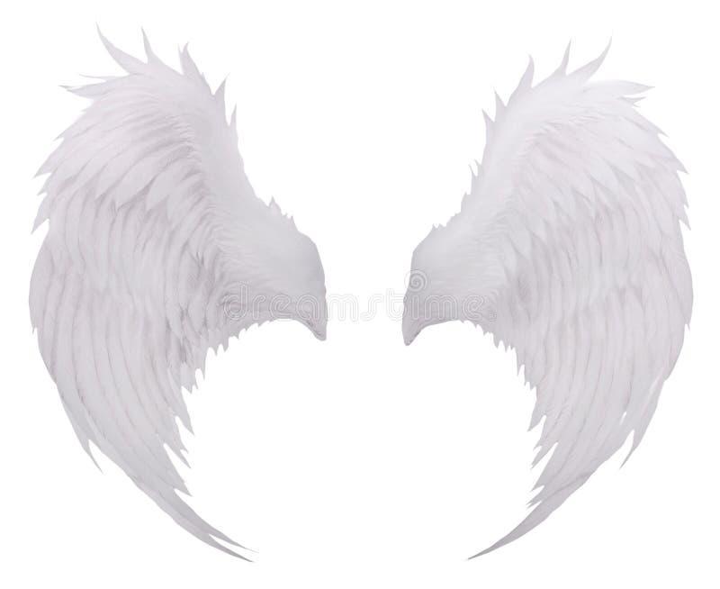 Gli uccelli bianchi traversano la piuma volando, uso bianco f del fondo isolato piume fotografia stock