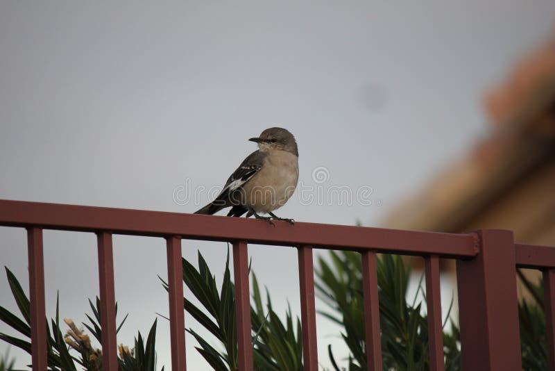 Gli uccelli del deserto tendono ad essere molto più abbondanti dove la vegetazione è più fertile e così offre più insetti, frutta immagine stock libera da diritti