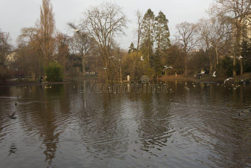 Gli uccelli e le anatre nel lago della città di Vienna parcheggiano fotografia stock