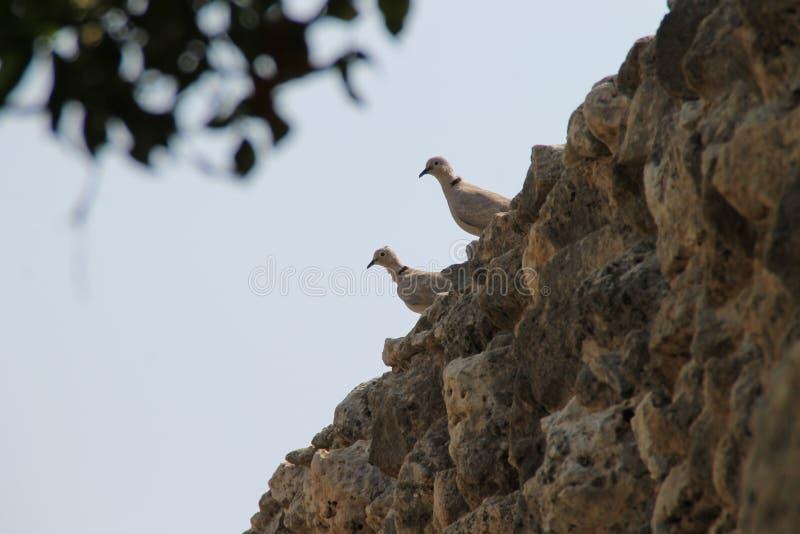 Gli uccelli fissano nella distanza attraverso le pietre! fotografia stock libera da diritti