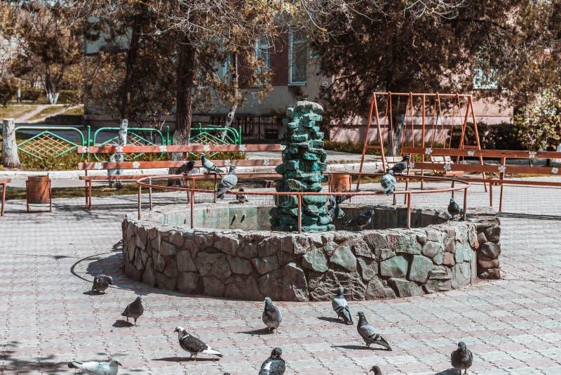 Gli uccelli sono conservati dal calore nella fontana fotografia stock