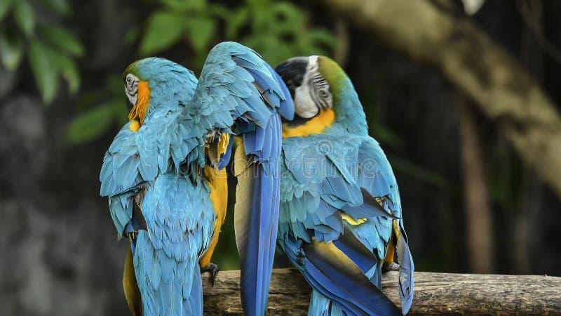 Gli uccelli sono limitati nello zoo Uccelli che mancano della libert? per vivere nel selvaggio immagini stock libere da diritti