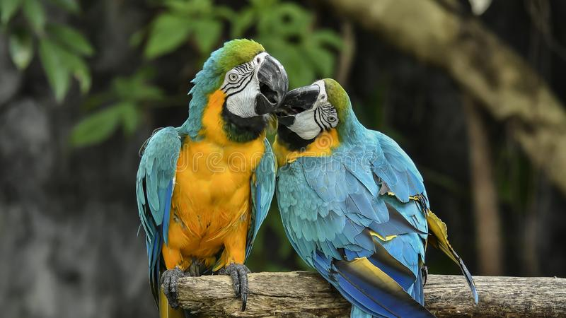Gli uccelli sono limitati nello zoo Uccelli che mancano della libert? per vivere nel selvaggio fotografia stock libera da diritti