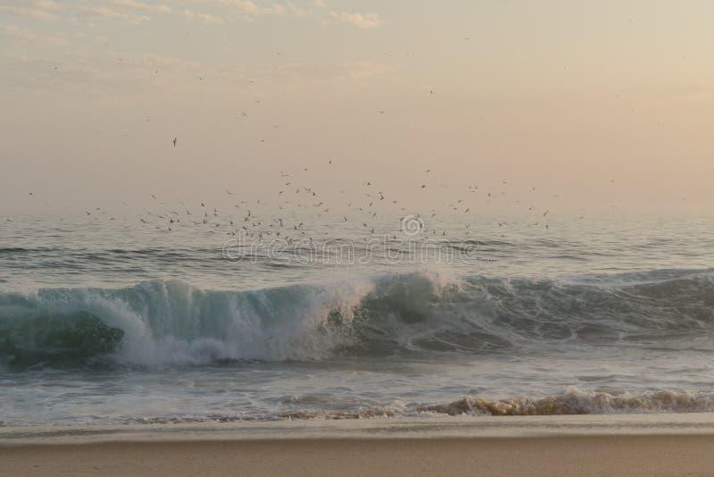 Gli uccelli sopra il mare immagini stock