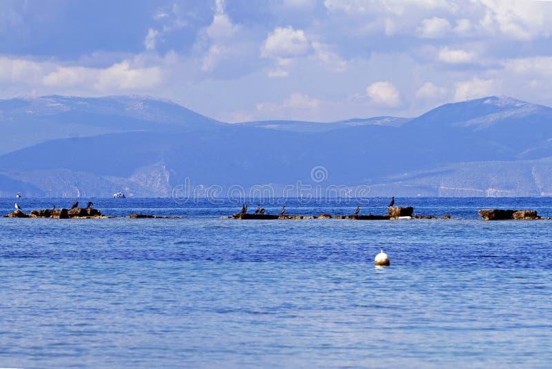 Gli uccelli stanno sedendo su un tempio sommerso del greco antico sull'isola di Aegina immagini stock