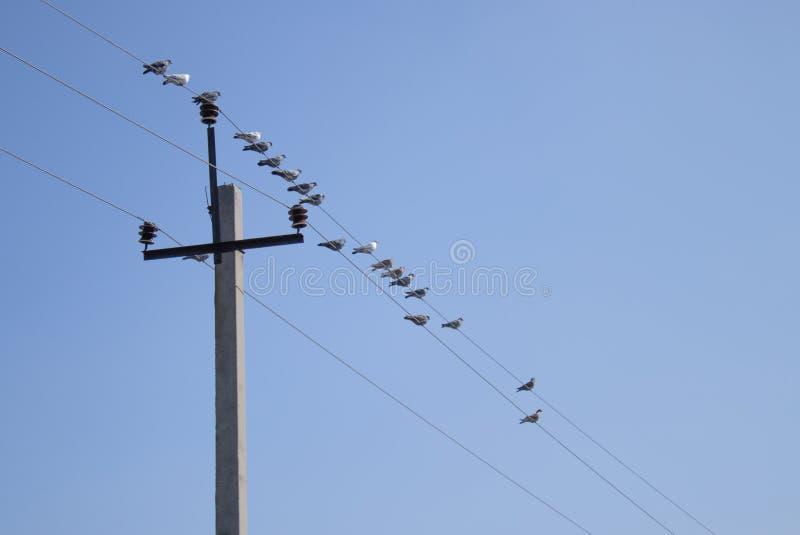Gli uccelli stanno sedendo sui cavi vicino alla colonna immagini stock