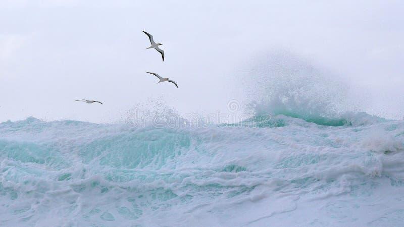 Gli uccelli tropicali salgono sopra le onde immagini stock