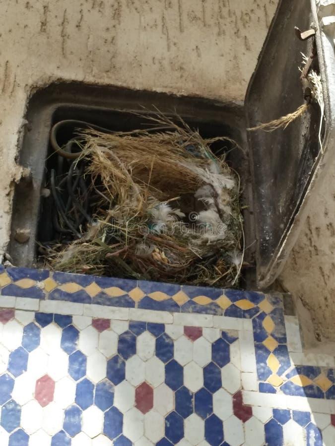 Gli uccelli vivono nel contatore elettrico fotografia stock libera da diritti