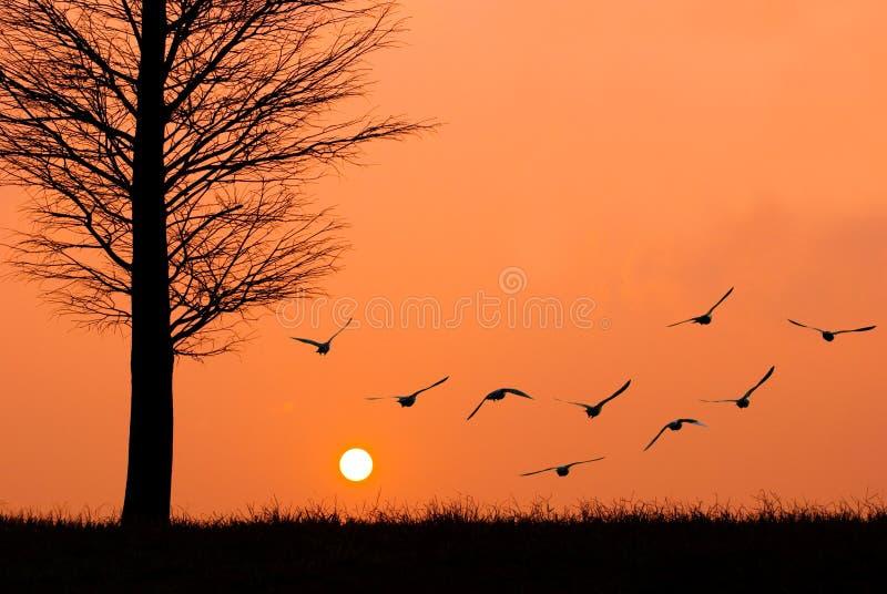 Gli uccelli volano al sole. fotografia stock