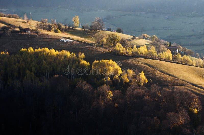 Gli ultimi colori dell'autunno fotografia stock libera da diritti