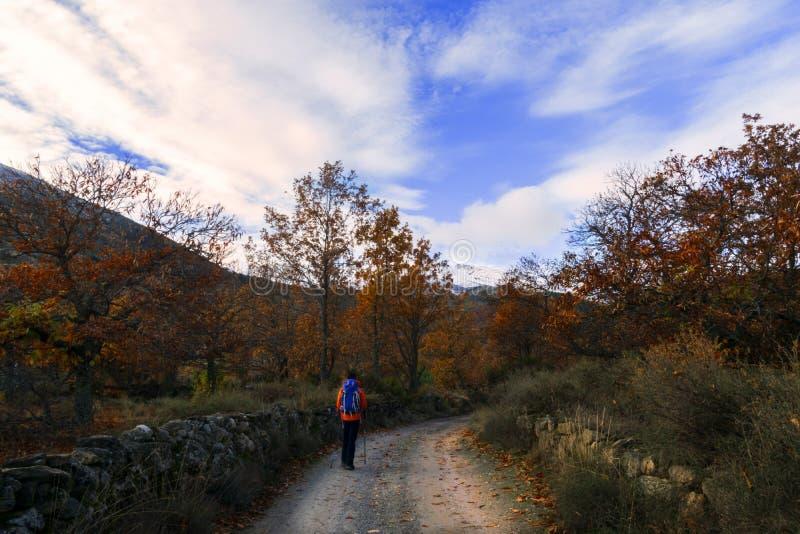 Gli uomini che camminano in un percorso betwwen gli alberi in un giorno di autunno fotografia stock libera da diritti