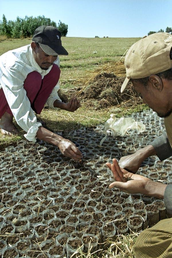 Gli uomini etiopici piantano i semi dell'albero nel progetto di silvicoltura fotografia stock